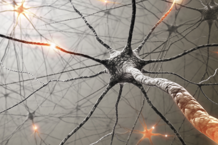 uszkodzone nerwy w stwardnieniu rozsianym